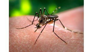 Estudian un posible caso de dengue en San Benito.  Foto: Internet