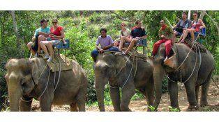 Elefante en celo asesinó a turista escocés en Tailandia