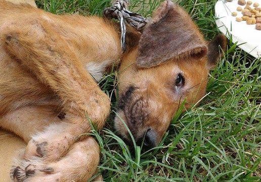 Preocupa la cantidad de perros abandonados en La Paz