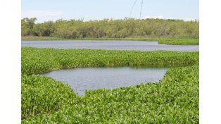 Humedal. El gobierno avanza en la protección ambiental.