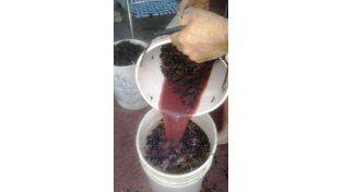 Productores familiares de La Paz experimentan en la creación de un vino artesanal