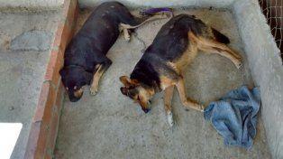Los perros del centro cívico esperan en una guardería de Bajada Grande.
