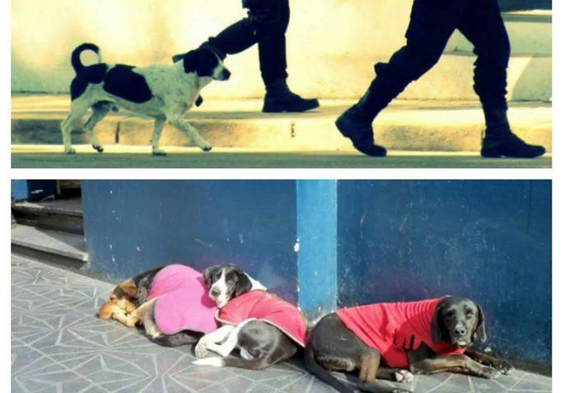 Los perros del centro cívico acompañaban a los policías que trabajan en la zona.