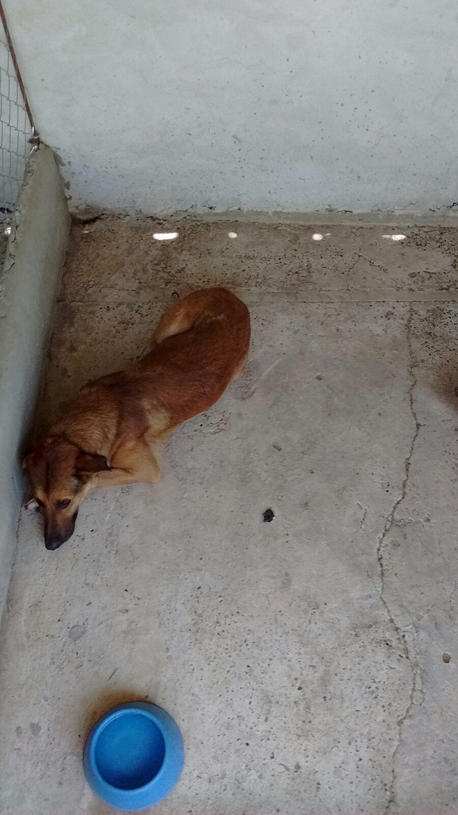 En la guardería esperan por una familia que los adopte.