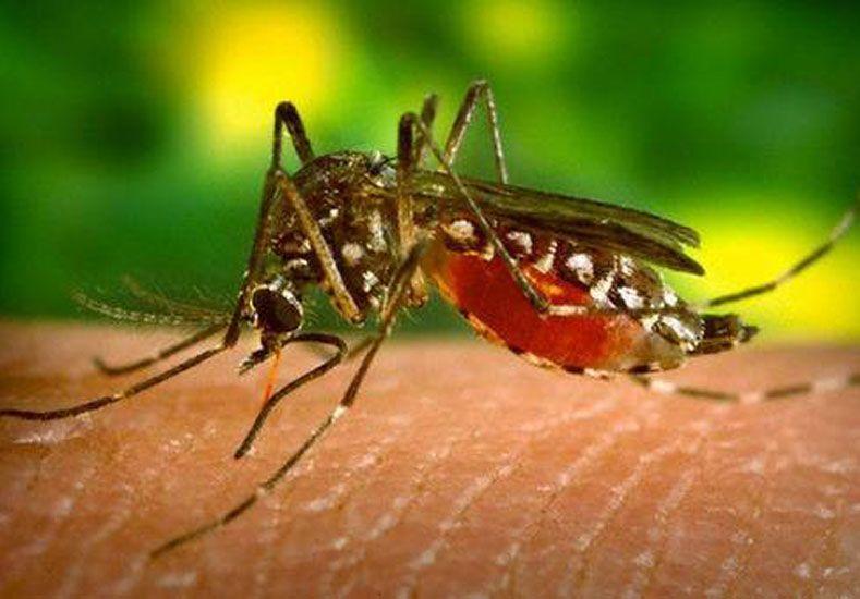 Está en estudio un posible caso de dengue, en San José