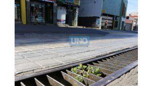 En pleno centro de Paraná crecen plantas medicinales