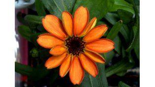 ¿Qué tiene de particular esta flor que su foto da vueltas el mundo?