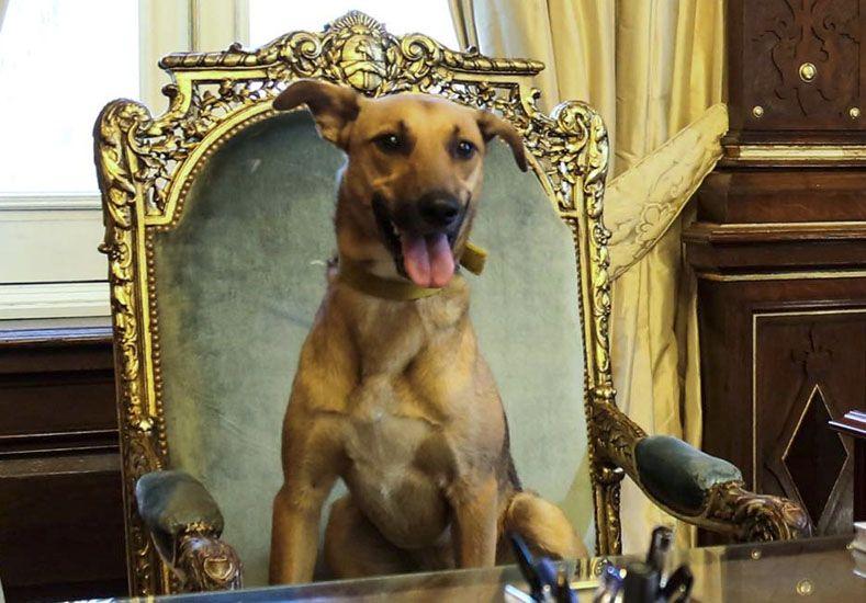 Macri sentó a su perro en el sillón de Rivadavia: Es el primer perro en llegar a ese lugar, dijo