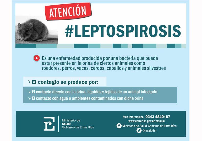 Difunden recomendaciones para evitar la leptospirosis