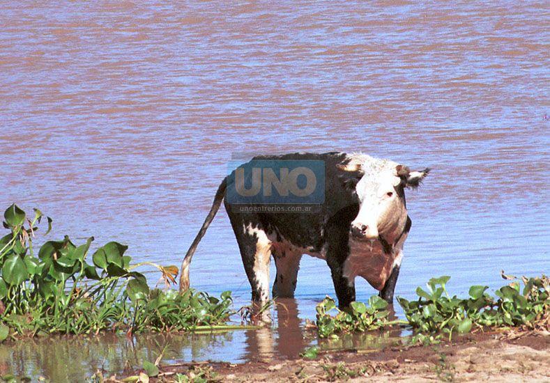 Foto: UNO: Archivo /Ilustrativa