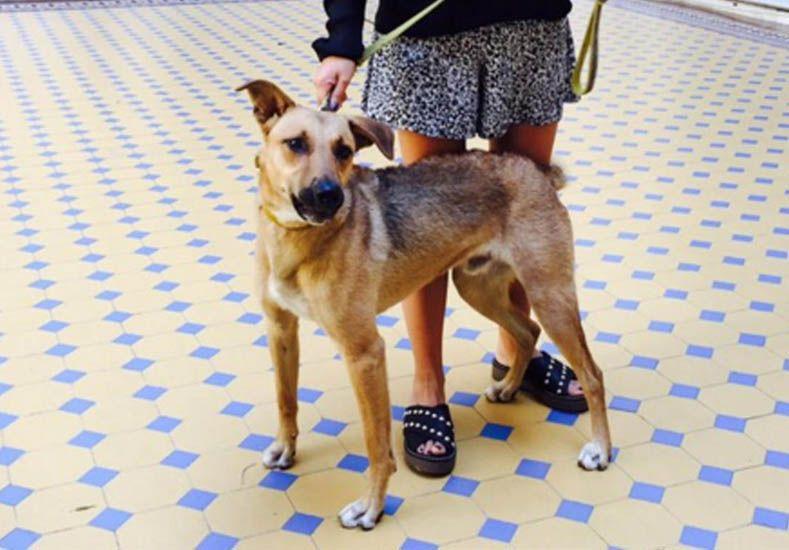 Balcarce, el perro de Macri, llegó a la Rosada