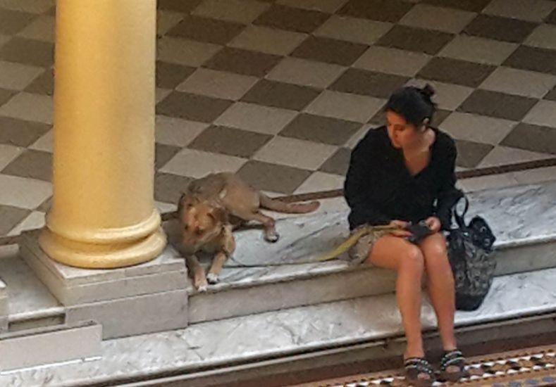 La mascota personal del presidente Mauricio Macri fue llevada por el mandatario a la Casa Rosada. Foto: Gentileza Juan Illescas