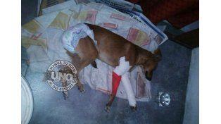 #UNOenLaCalle: vecinos salvaron a una perra atropellada