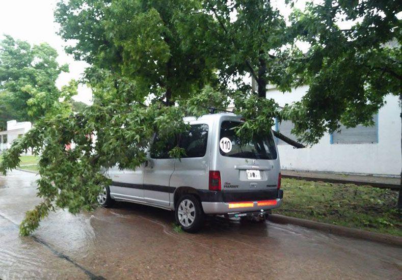 Postal. En Ramírez el temporal generó caída de árboles.Foto Gentileza/Seguí Noticias