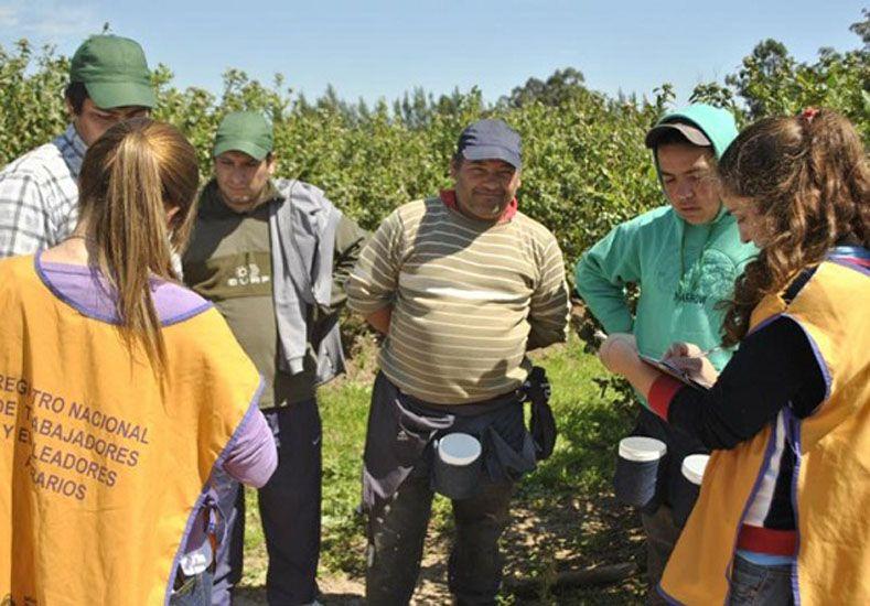 En el periodo 2012 - 2015 Renatea otorgó más de 300.000 libretas de trabajo agrario