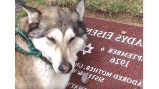 Este perro es un fiel amigo hasta en las últimas.  Foto: Captura de video.