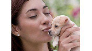 Los animales y mascotas preferidos por cada signo