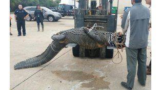 Escenas de pánico ante la aparición de un enorme caimán caminando en un centro comercial