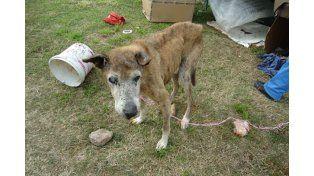 Proponen ley para multar y encarcelar a maltratadores de animales
