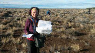 Por qué una zona de la Patagonia argentina se quedó sin hormigas