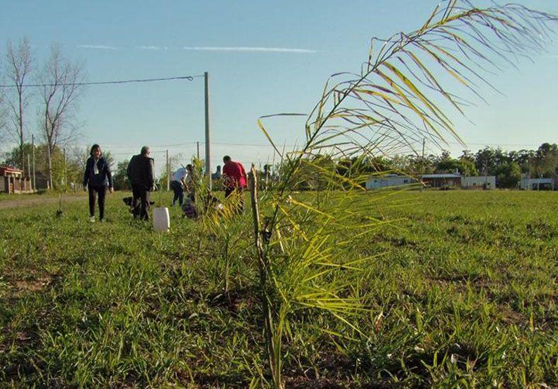 Parquización. Los vecinos mejoran el entorno natural. Foto Gentileza/ Facebook Barrio Las Acacias