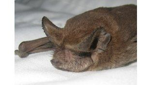 Comportamiento. Viven en colonias y consumen insectos.   Foto Internet/Ilustrativa