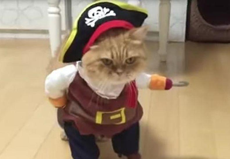 El vídeo del gato que triunfa en las redes disfrazado de pirata