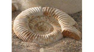 Arrestaron a dos europeos por robar fósiles argentinos valuados en 5 mil euros