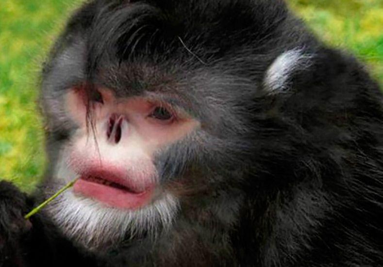 WWF reveló cuáles son los animales exóticos más raros