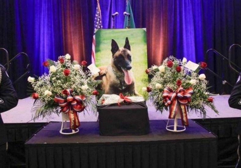 Un perro valiente que sin duda se merece todos los honores.  Foto: AP