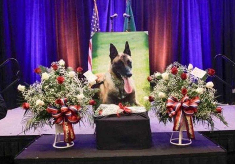 Ike merecía todos los honores y mucho más.   Foto: AP