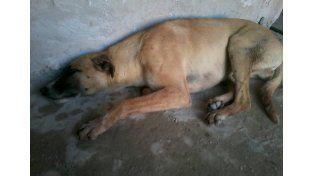 Uno de los perritos heridos. Foto Facebook Hogar Ternura
