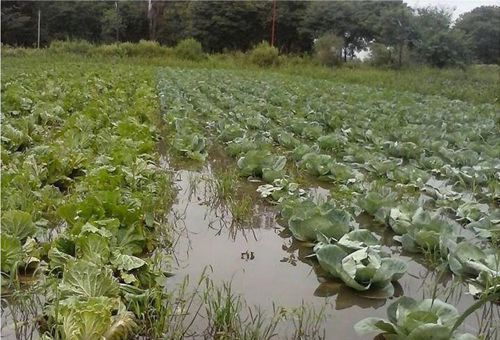 Se espera un aumento en las verduras de hoja