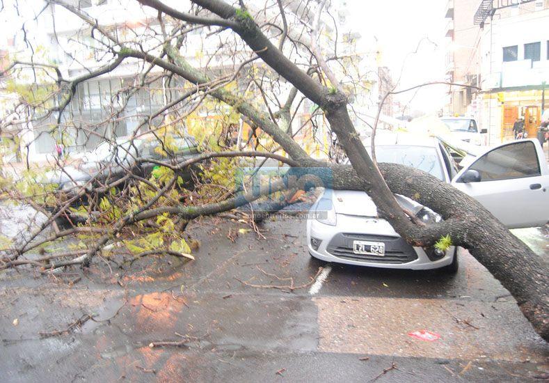 Un árbol y una columna cayeron en calle Laprida