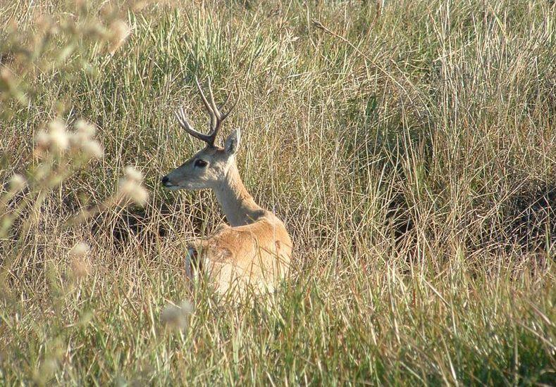 Cazaban ciervos en una reserva natural