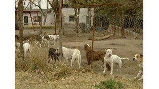 Nueve perros mataron a un sereno en el predio que cuidaban en Buenos Aires