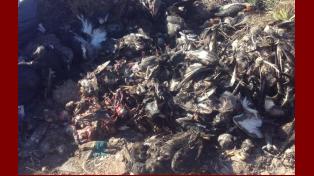 Encontraron los restos de unos 100 patos a orillas de un arroyo