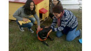 Instalan casitas de madera para perros abandonados en Paraná
