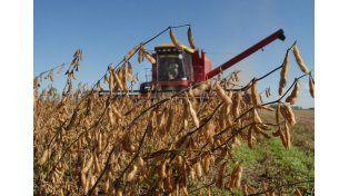 Campaña. Especialistas analizaron la calidad de la legumbre.  Foto ilustrativa