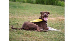 Se recupera Caitlyn, la perra a la que le encintaron el hocico