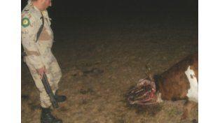 Apareció una vaca mutilada en un campo de Nogoyá