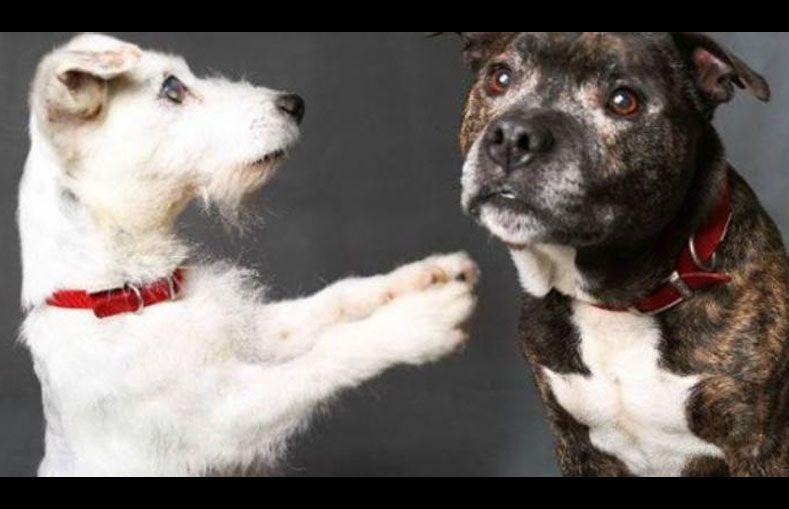 ¡Qué me van a hablar de amor! La historia del perro ciego y su perro guía