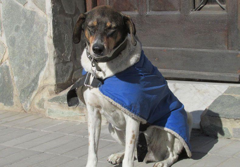 "Atuendo. ""Poca Changa"" pasea a diario por calle Perú con su capa con corderito."