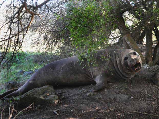 El animal estuvo un día descansando bajo los árboles.