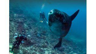 Google StreetView ya ofrece imágenes submarinas