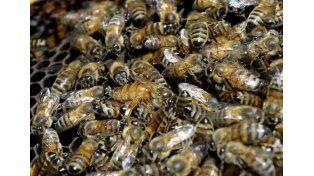 El anciano soportó más del doble de la dosis letal de veneno de abeja