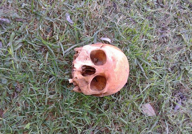 Encontraron un cráneo en Lomas del Seminario
