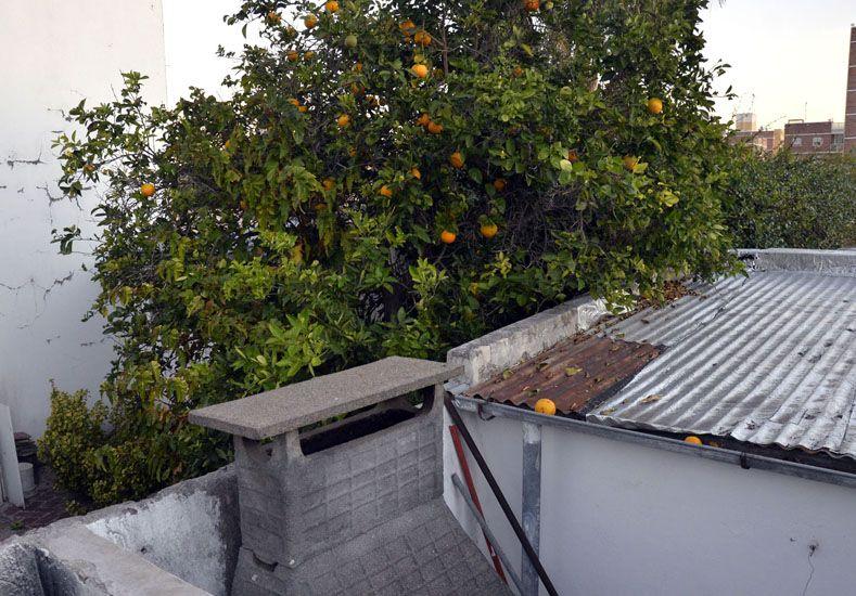 Los árboles frutales crecen hasta en las macetas del patio