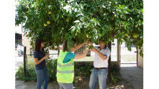 Monitoreo. El Senasa realiza inspecciones para prevenir el HLB.
