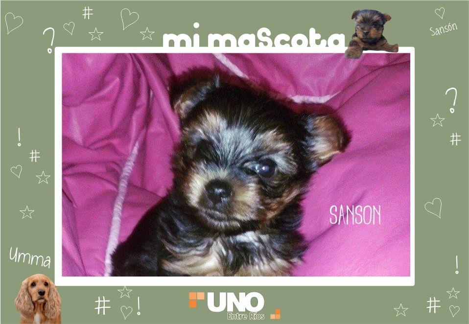 #MiMascota en el UNO